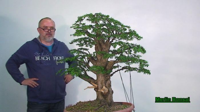 Bonsai Gestalten bonsai.de shop, literatur/dvd, dvd, [1951] dvd merlin bonsai 1