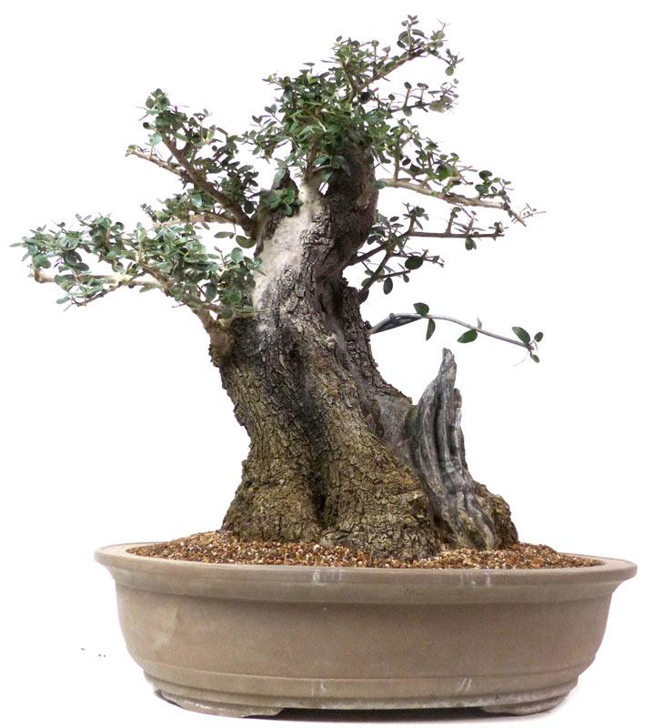 arbre niwaki achat