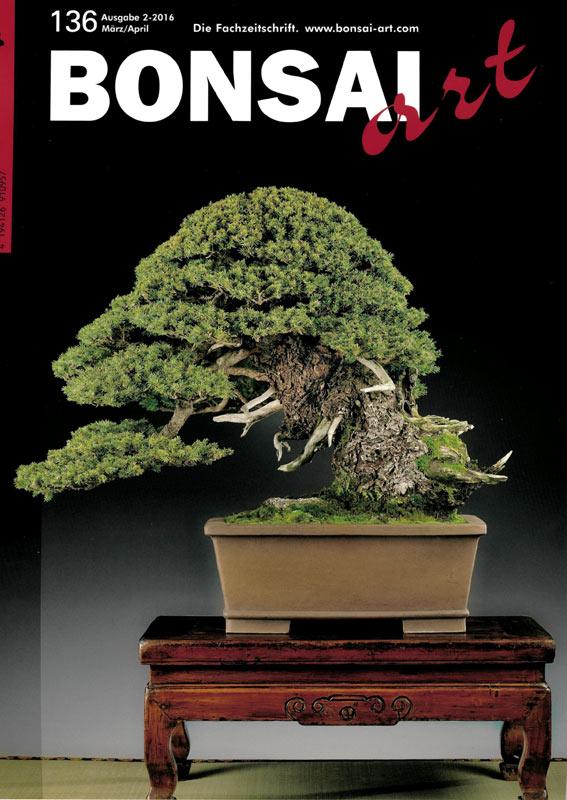 bonsai umtopfen umtopfen bonsai umtopfen bonsai umtopfen umtopfen verschiedene bonsai azalee. Black Bedroom Furniture Sets. Home Design Ideas