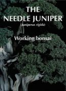The Needle Juniper - Working Bonsai