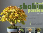 Roland Schatzer: Bonsai Shohin Passion (italiano)