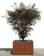 Planter (COR-TEN steel) - ca. 100 x 100 x 65 cm