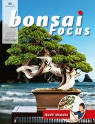 Bonsai-Focus 95 Januar/Februar 2019