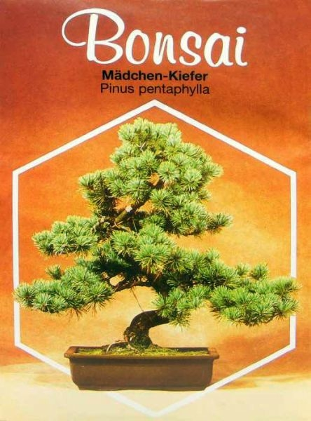 Seed (Outdoor) - www.bonsai.de