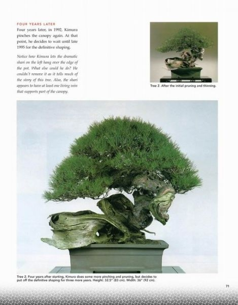 The Magician - www.bonsai.de