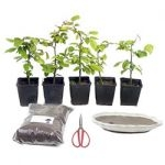 Spar-Sets - www.bonsai.de